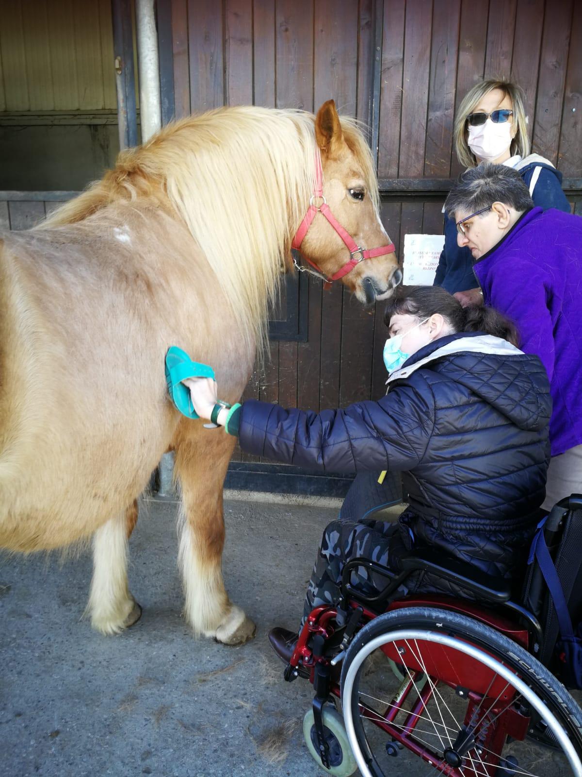 cso ippoterapia cavalli